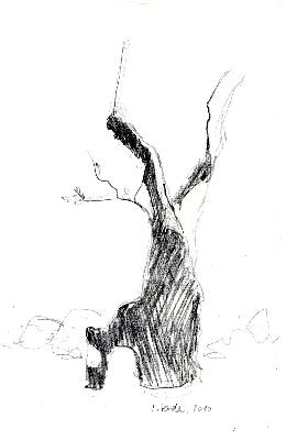 ausgebrannte-olive-2bleistift-2010