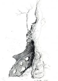 ausgebrannter-olivenbaum-3-bleistift-2010