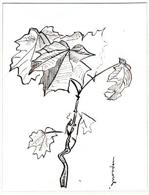 ahornsproessling-1957