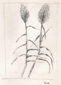 Bambus 2