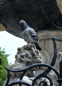 Herkulesbrunnen.Detail